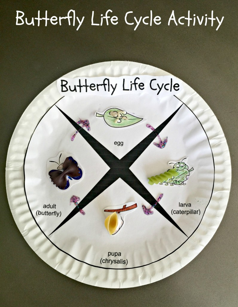 Butterfly Life Cycle Activity