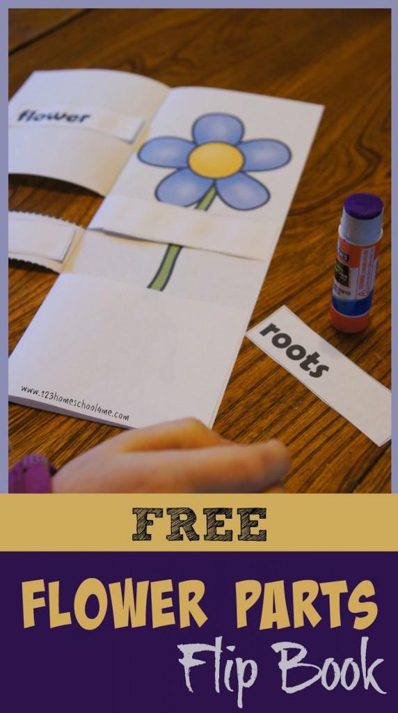 Flower Parts Flip Book